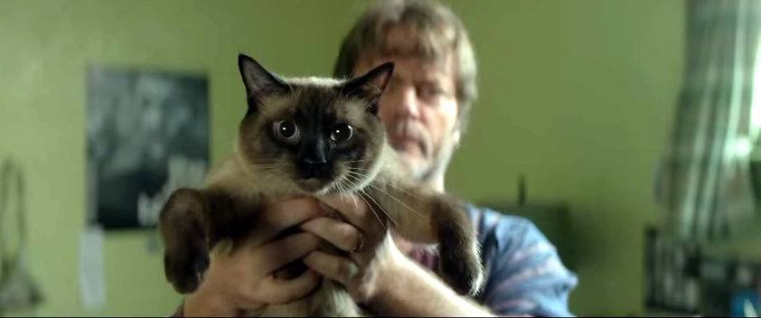 nick offerman cat